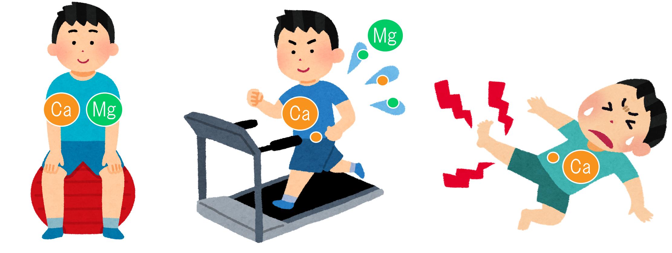 プロテイン摂取は運動前と運動後どちらが ...
